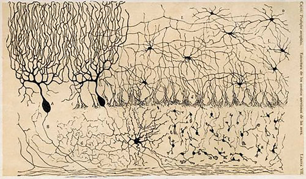 Early drawings of the brain