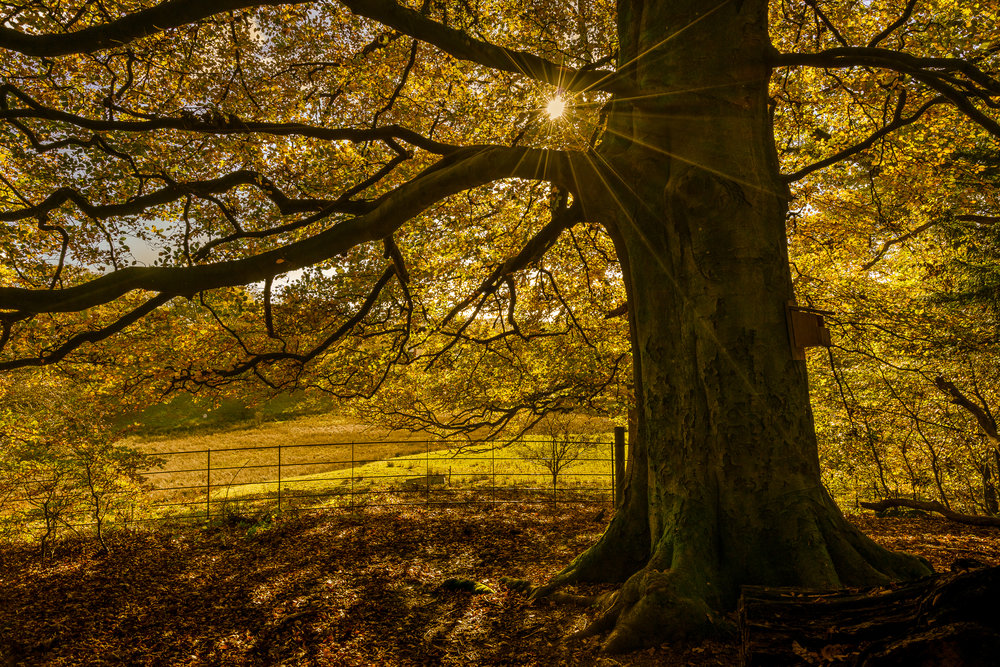 autumn sun-tree (1 of 1).jpg