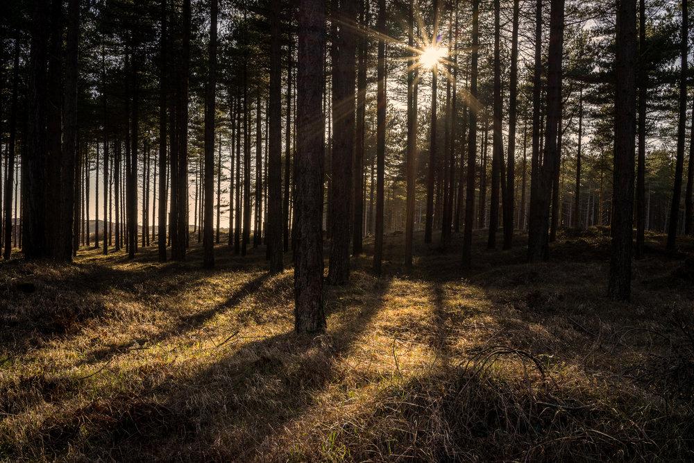 newbrough forest (1 of 1).jpg