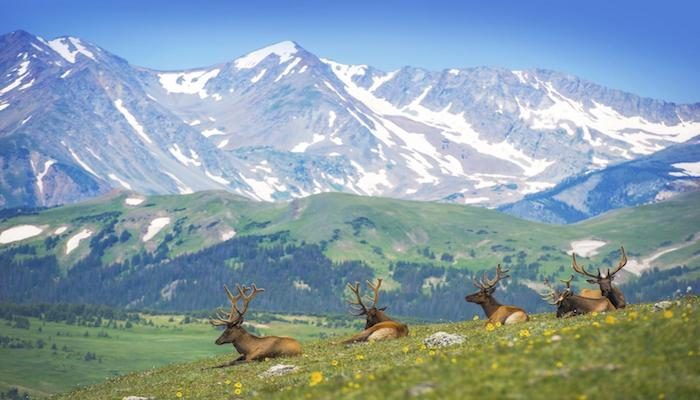 A heard of elk, spotted from atop a pair of burly shoulders