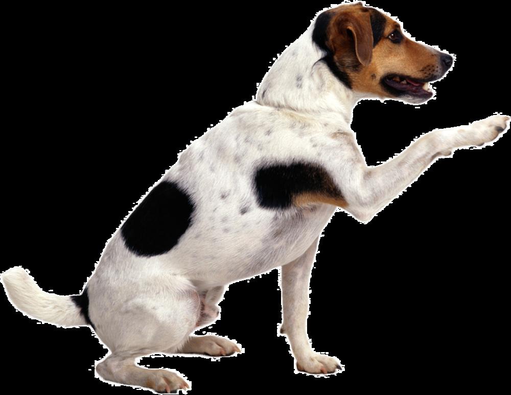 dogpointing.jpg