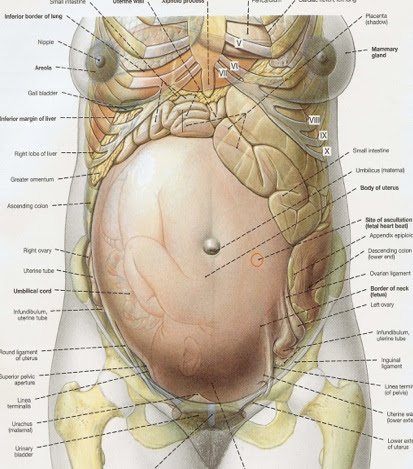 Anatomy Trains The Female Pelvis In The Cycles Of Life Zion