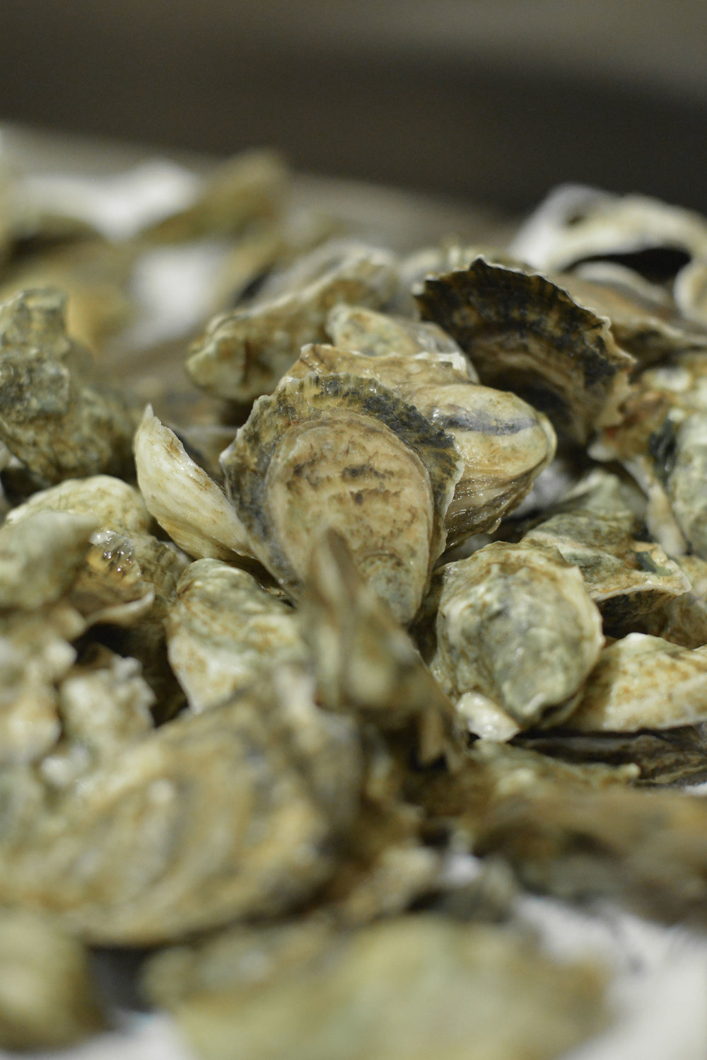 Oysters-bubbly--11.jpg