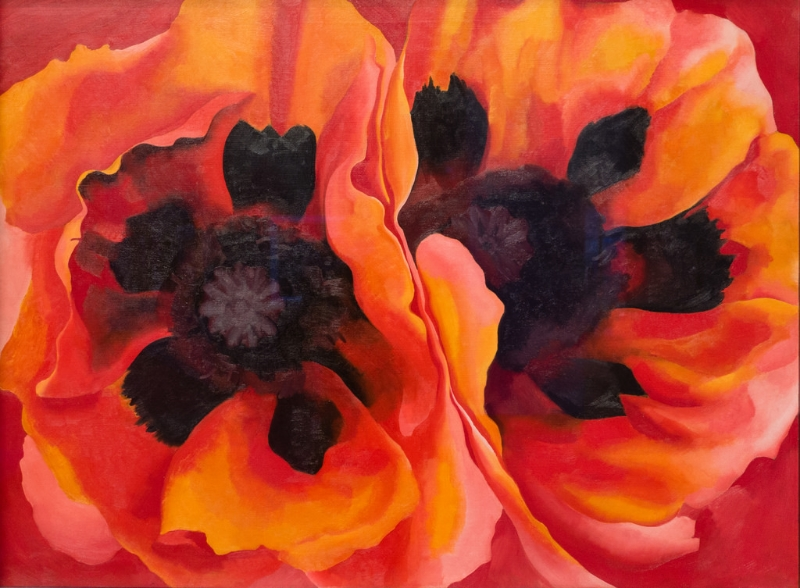 O'Keeffe's  Oriental Poppies