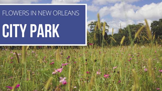 New Orleans City Park Flowers.png