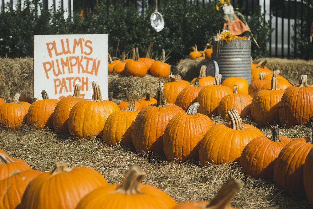 Gabes First Halloween-056.jpg