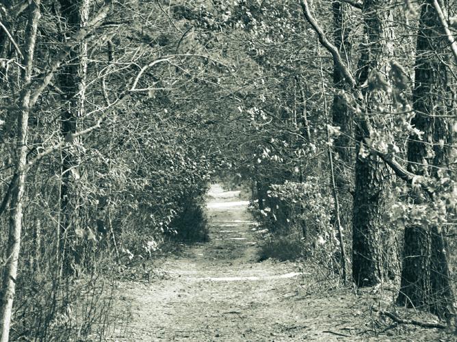 Tritone_trail.jpg