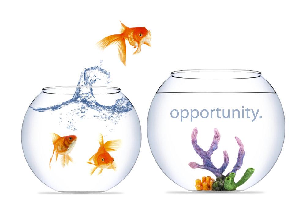 Opportunity Hub101