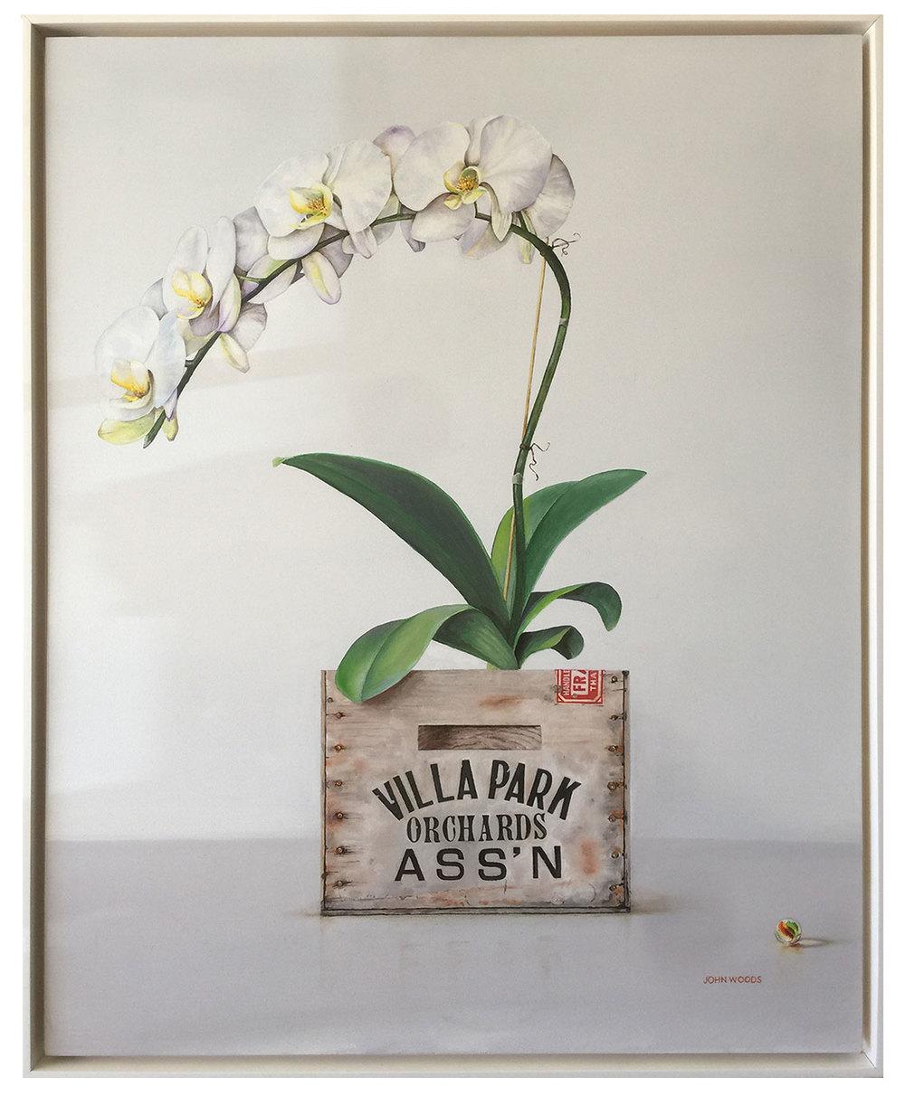 Villa Park Orchid - oil on panel