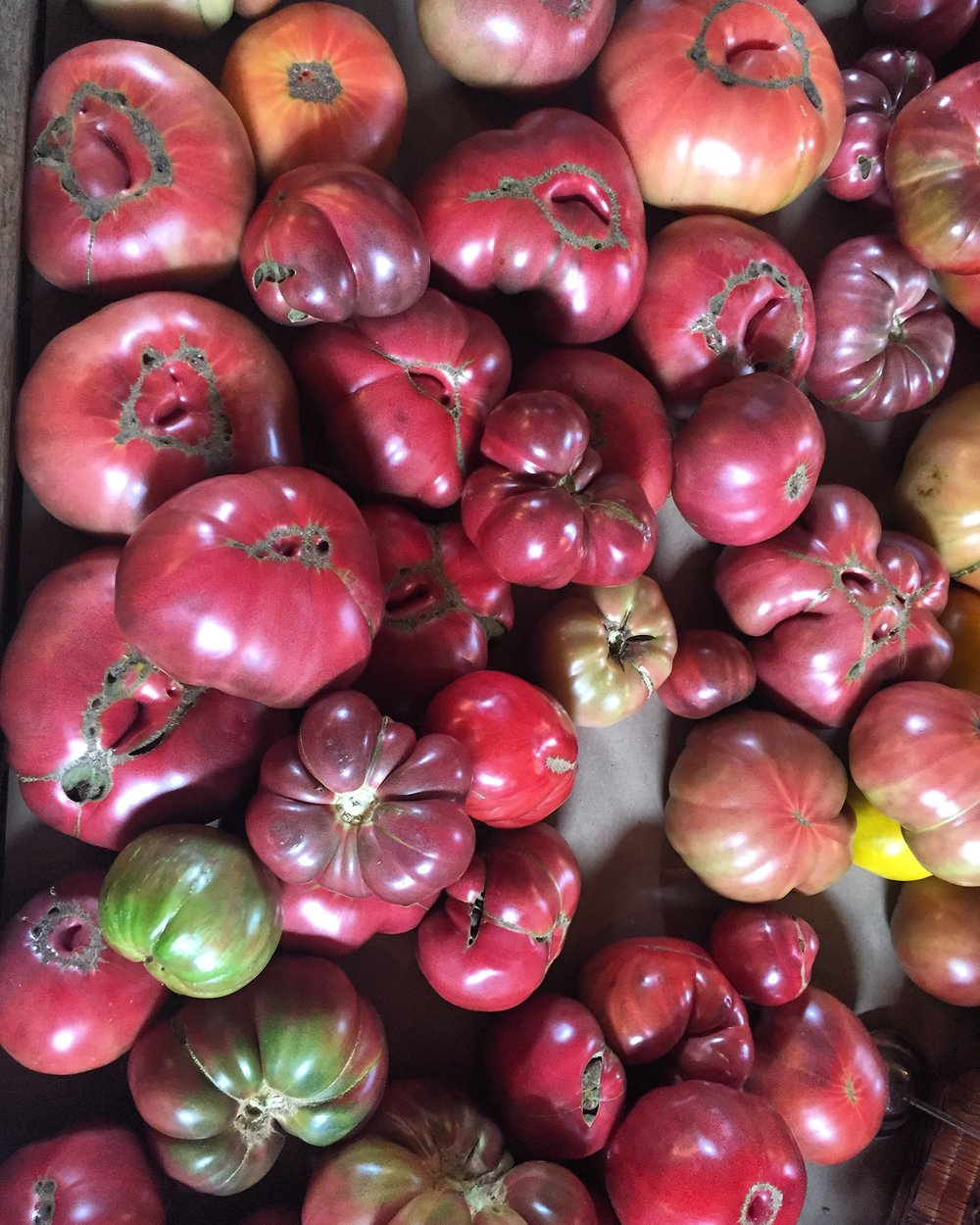 Heirloom Tomato Season, aka our favorite time of the year!