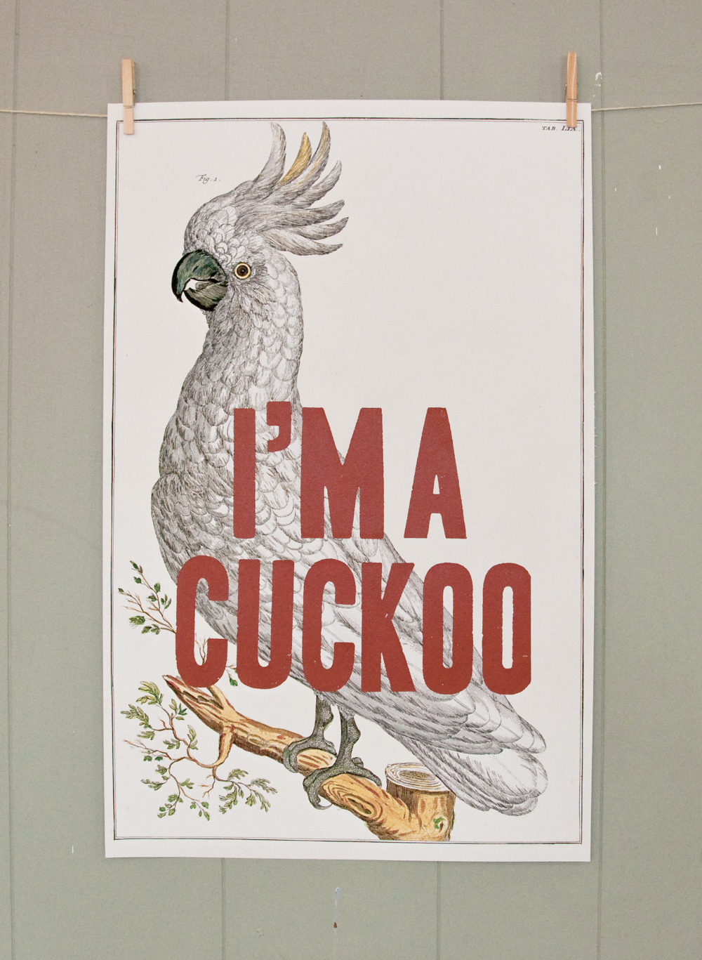 I'm a cuckoo.
