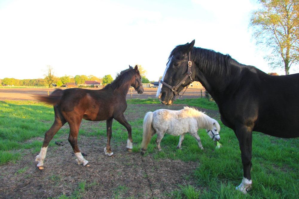 ドールンスペイクの馬たち