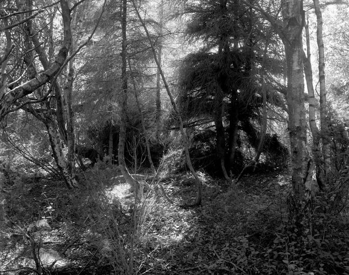 Den magiske skogen / The Magical Forest