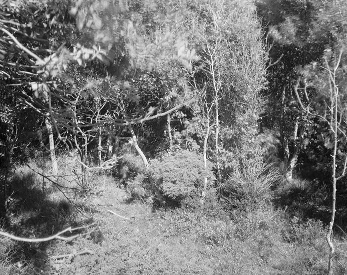 075treesbushes.jpg