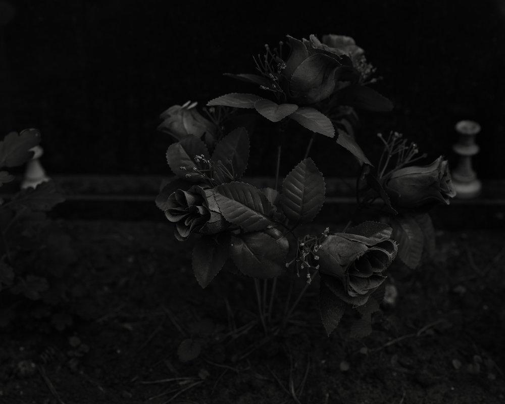 Rose, Mikael Tals grav_master.jpg