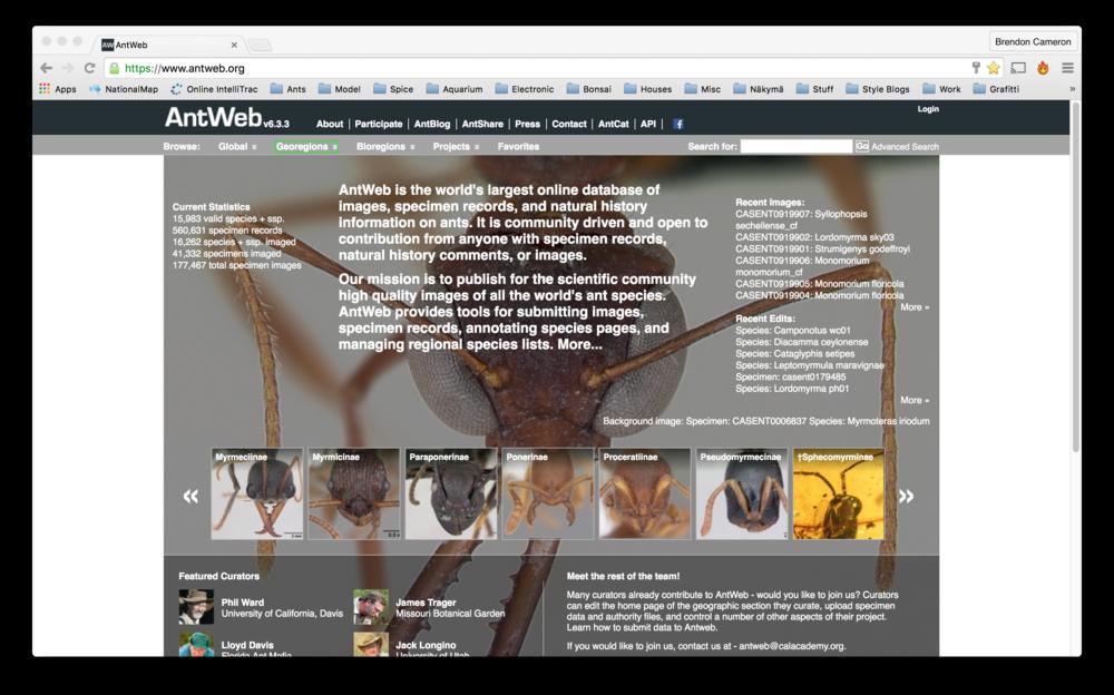 antweb.png