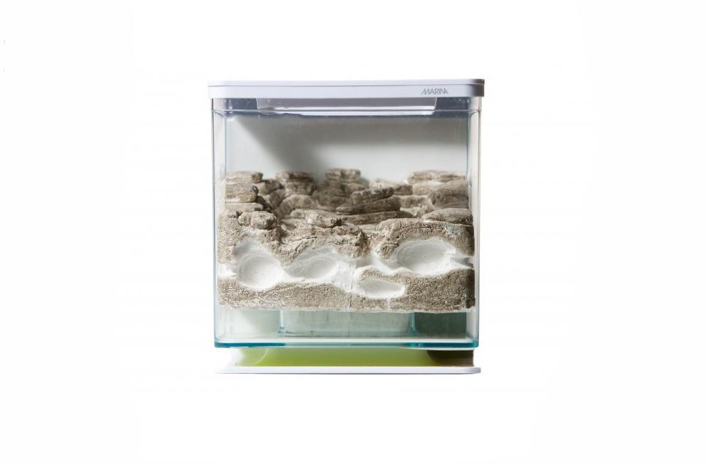 -fourmiliere-ants-garden-galets-gazon-exp24h2.jpg