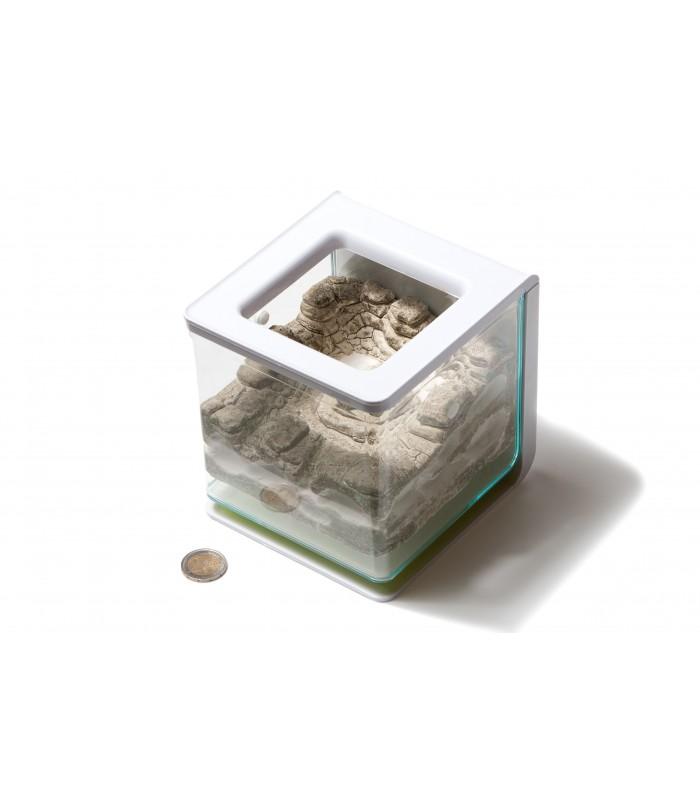 -fourmiliere-ants-garden-galets-gazon-exp24h (1).jpg