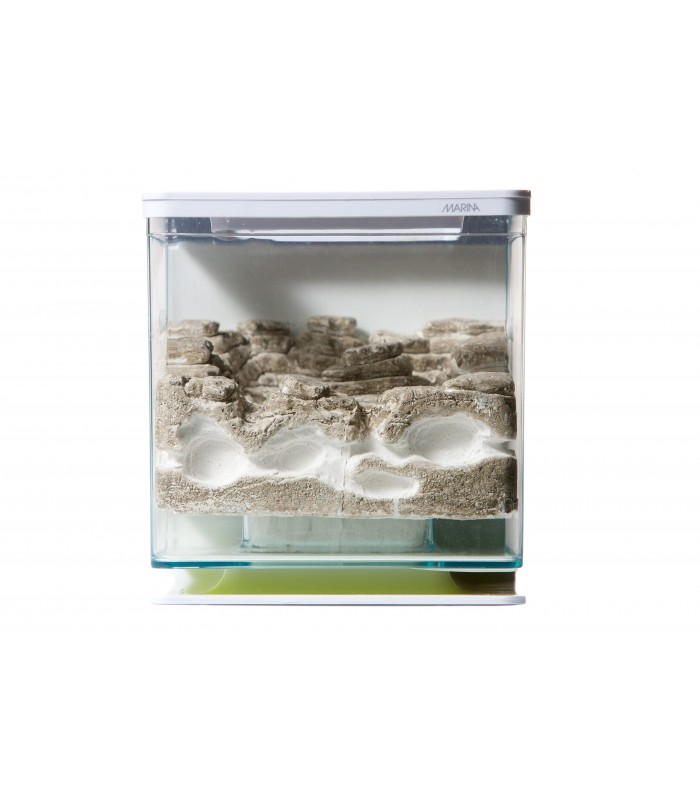 -fourmiliere-ants-garden-galets-gazon-exp24h-1.jpg