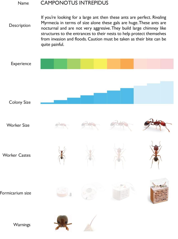 Camponotus intrepidus info.png