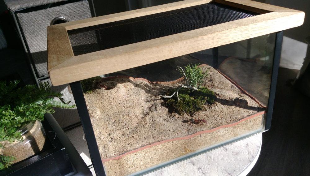 Coffee table display.jpg