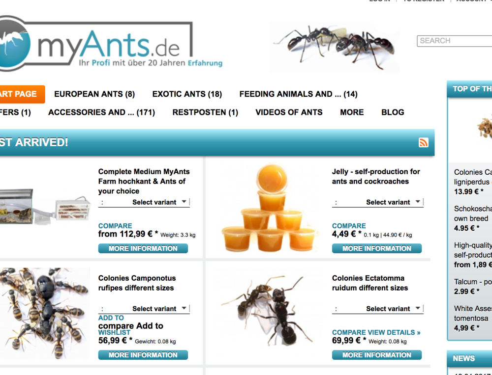 19 Year Old German Man Steals Ant Colonies, Sells Them On Ebay ...