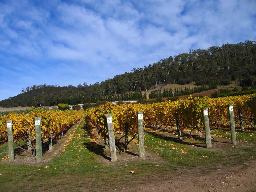 Bicheno - Tasmania - Australia