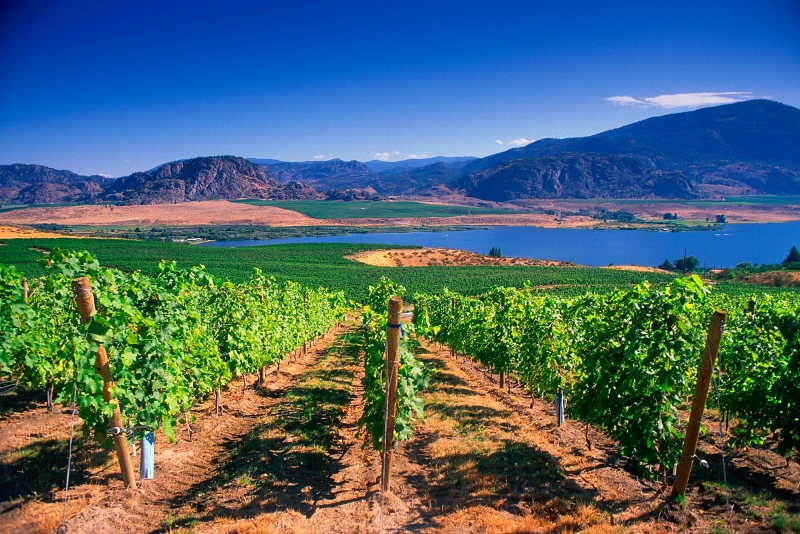 Okanagan Valley - British Columbia - Canada