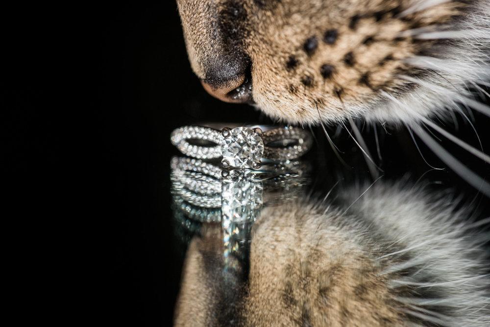 engagement ring, pittsburgh wedding photographers