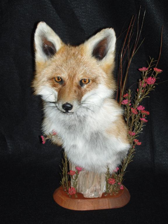 Fox 2 (Large).jpg