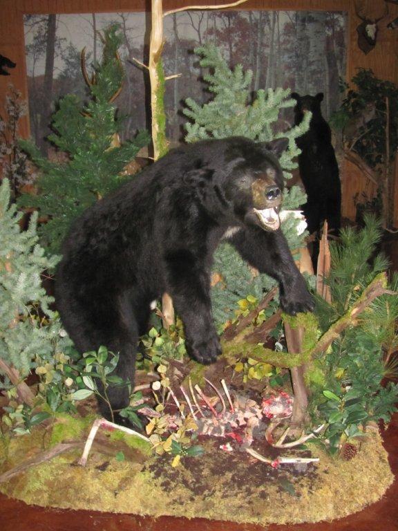 Bear over Bones.jpg