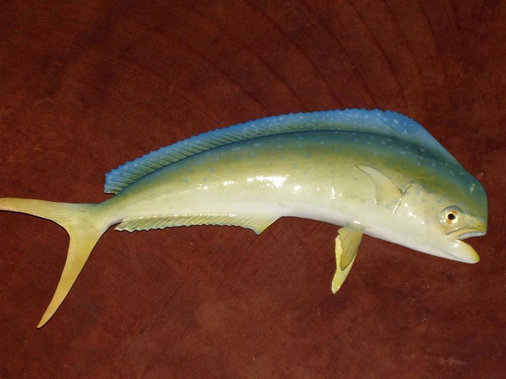 dolphin (Large)1.jpg