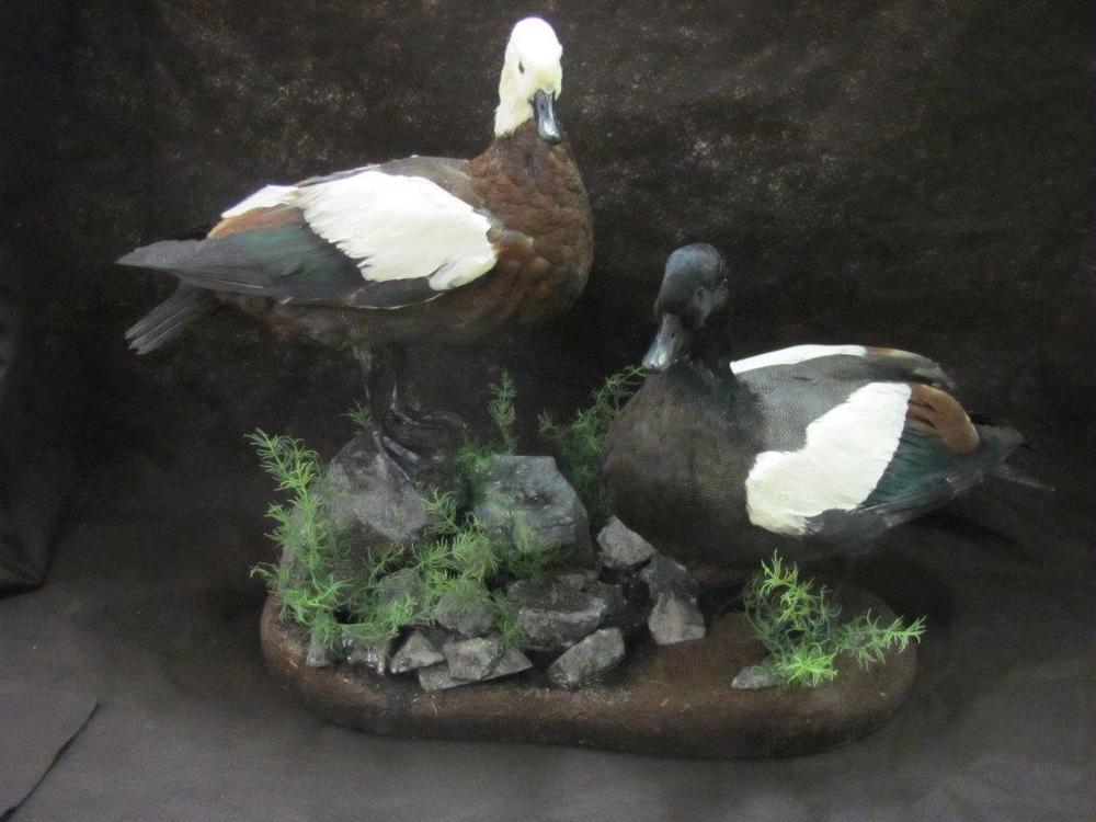 08_19_14 Ducks 1.jpg