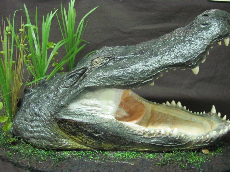 Alligator Head.jpg