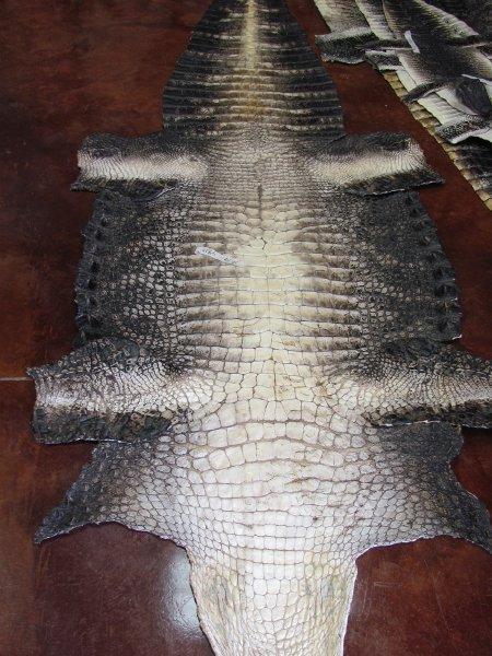 Alligator Skin.jpg