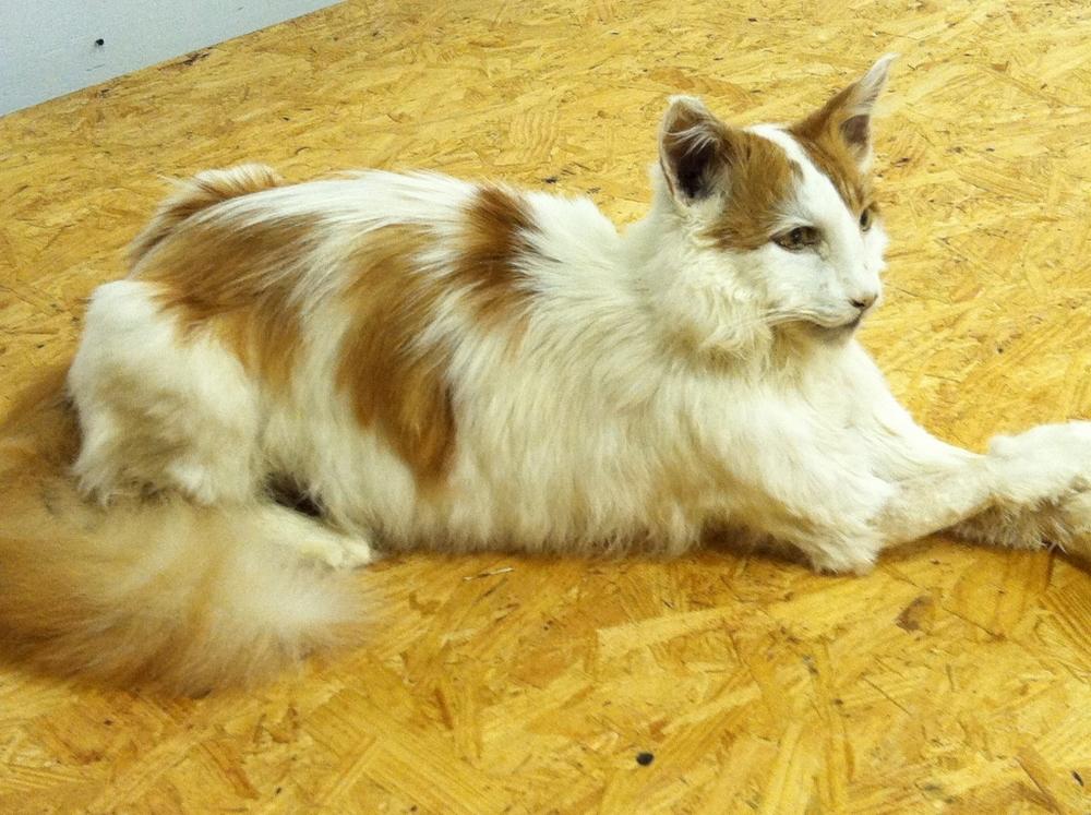 Pets Cat 2 11_12_13.jpg