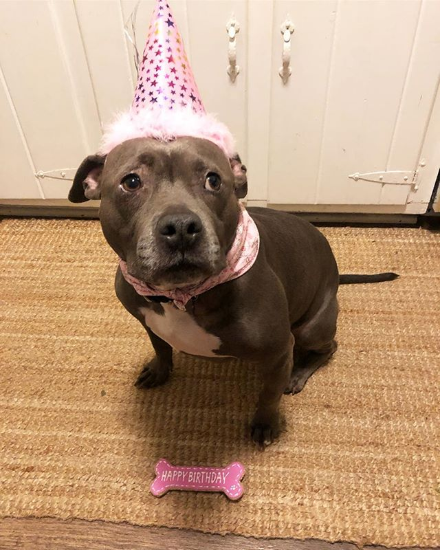 """Oh no thanks, I don't do sugar it's terrible for.....Wait, is THAT A CUPCAKEAHHHH!!!"" Happy Birthday Pig you savage beast 🐽 👑 #bluedognellie"