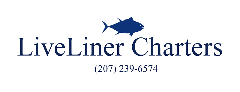 Maine deep sea fishing charters f v liveliner portland for Maine deep sea fishing charters