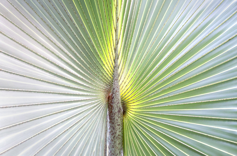 Palm Frond at Gardens by the Bay