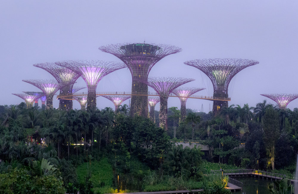 Super Tree Grove at Gardens by the Bay