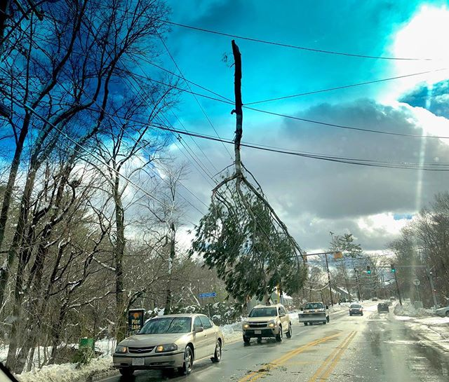 "New meaning to the phrase ""hanging by a thread"". Apparently the power crews felt it was okay to leave this large tree limb until later.  Rte 135 near the Ashland T station. #powerline, #stormdamage, #treelimb, #dangerous, #straightshot #thatsnotmistletoe, #hangingbyathread, #holycow, #limbo, #nofilterneeded"