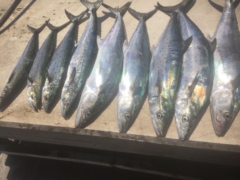 Hilton Head Charter Fishing
