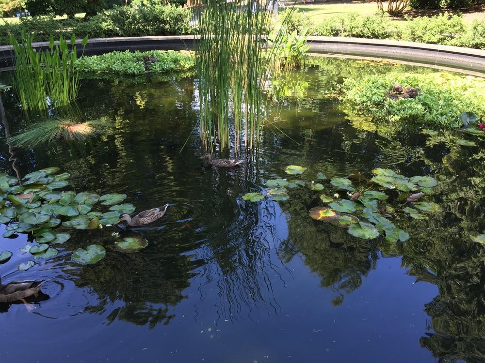 beautiful pond in volunteer park