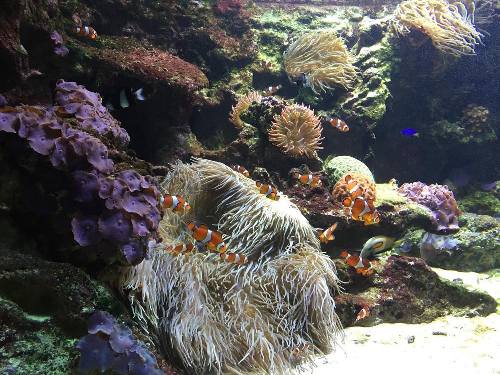 vancouver aquarium.