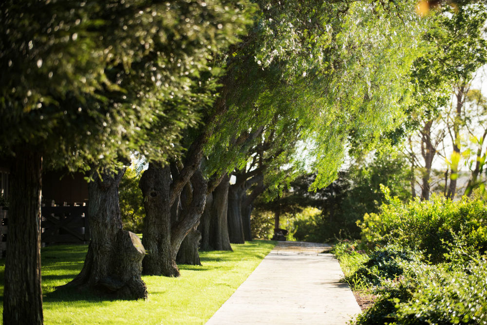 Pepper Tree Walkway