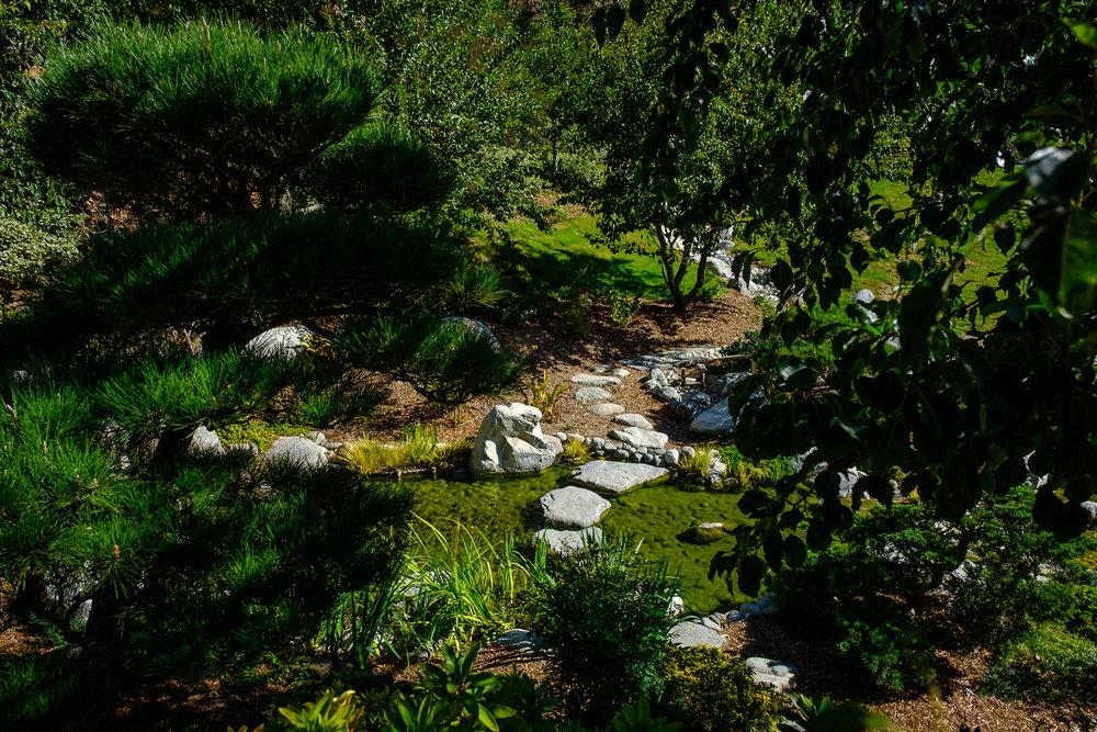 Dominic Nepomuceno - Garden Beauty Shot - October 6 2016 (Permission from Photographer) (24).jpg