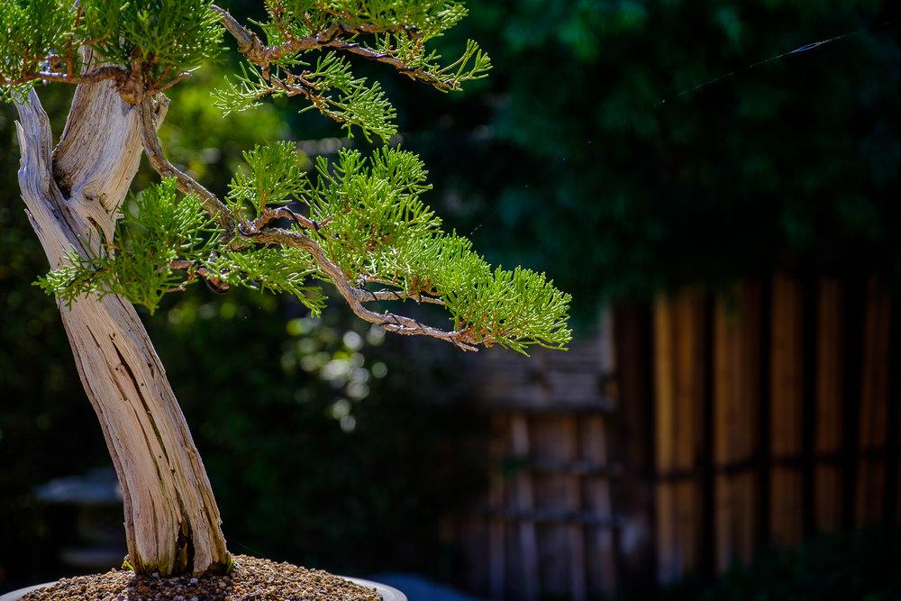 Dominic Nepomuceno - Garden Beauty Shot - October 6 2016 (Permission from Photographer) (30).jpg