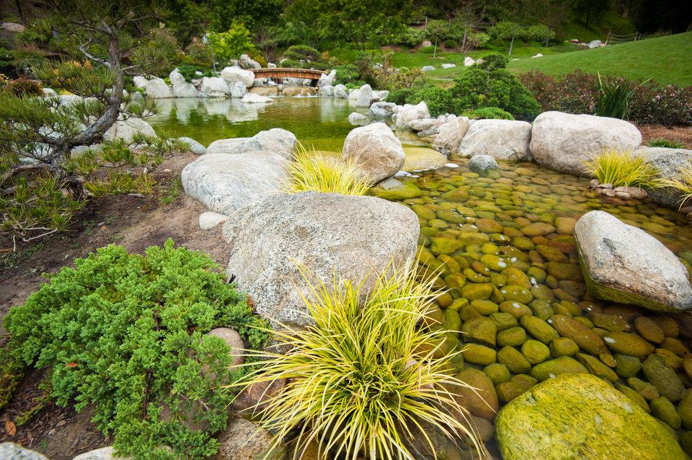 Yasuhiro Fujiki - Garden Beauty Shot - April 21 2015 (Permission from Photographer) (9).jpg