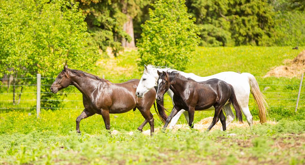 Horses---Social-Media-07-copy.jpg