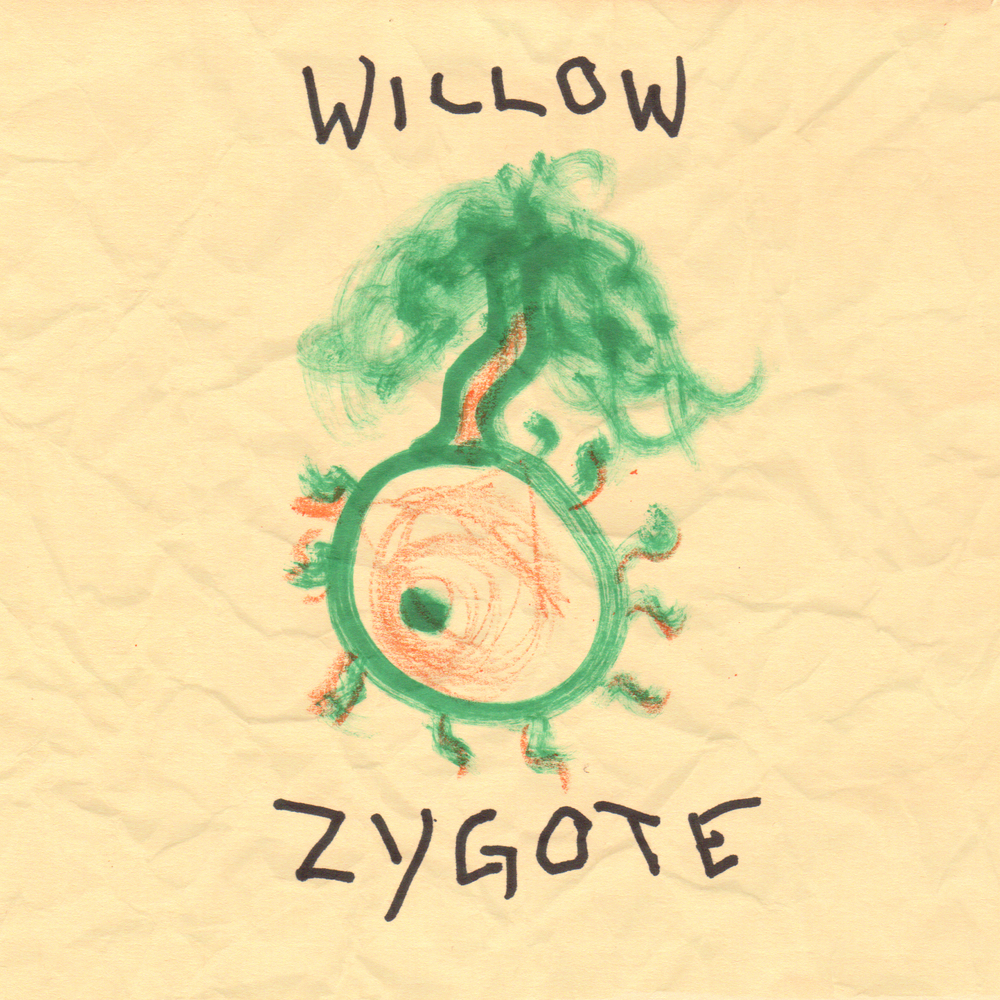 Willow_ZygoteSquare.jpg